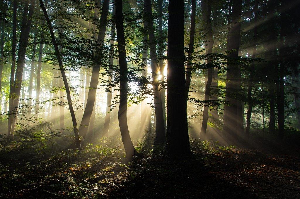 spirit of light