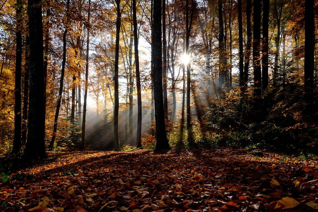 rays of light II