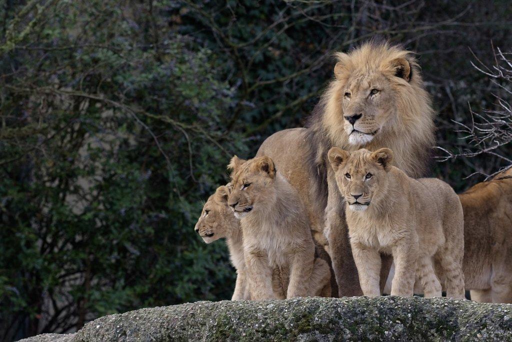 160117-Zoo-112024.JPG