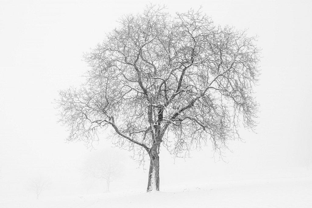 180318-nature-124830-Edit.JPG